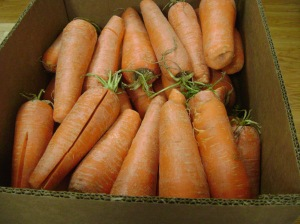 Second harvest carrots from Dare to Care mobile food bank